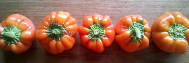 Little orange capsicums from Dilliro Vegetables