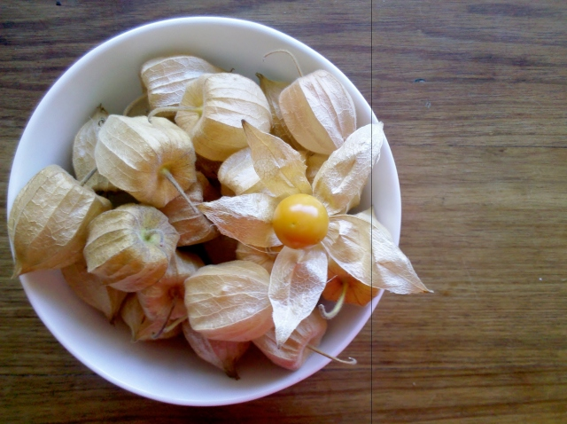 Cape Goosebrries from Windellama Organics