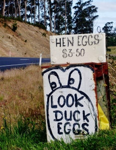 Duck eggs for sale in Rocky Cape