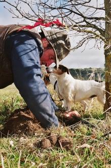 Damian Robinson digging out a truffle